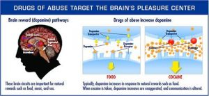 drugs-and-the-brain