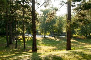Find Drug and Alcohol Rehab in Alabama