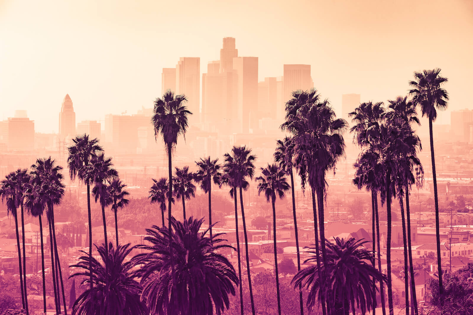 Palm Trees In Front Of The Skyline Of Los Angeles, California