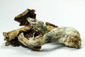 Psilocybin Mushrooms Are Typically Consumed After They Have Dried Out