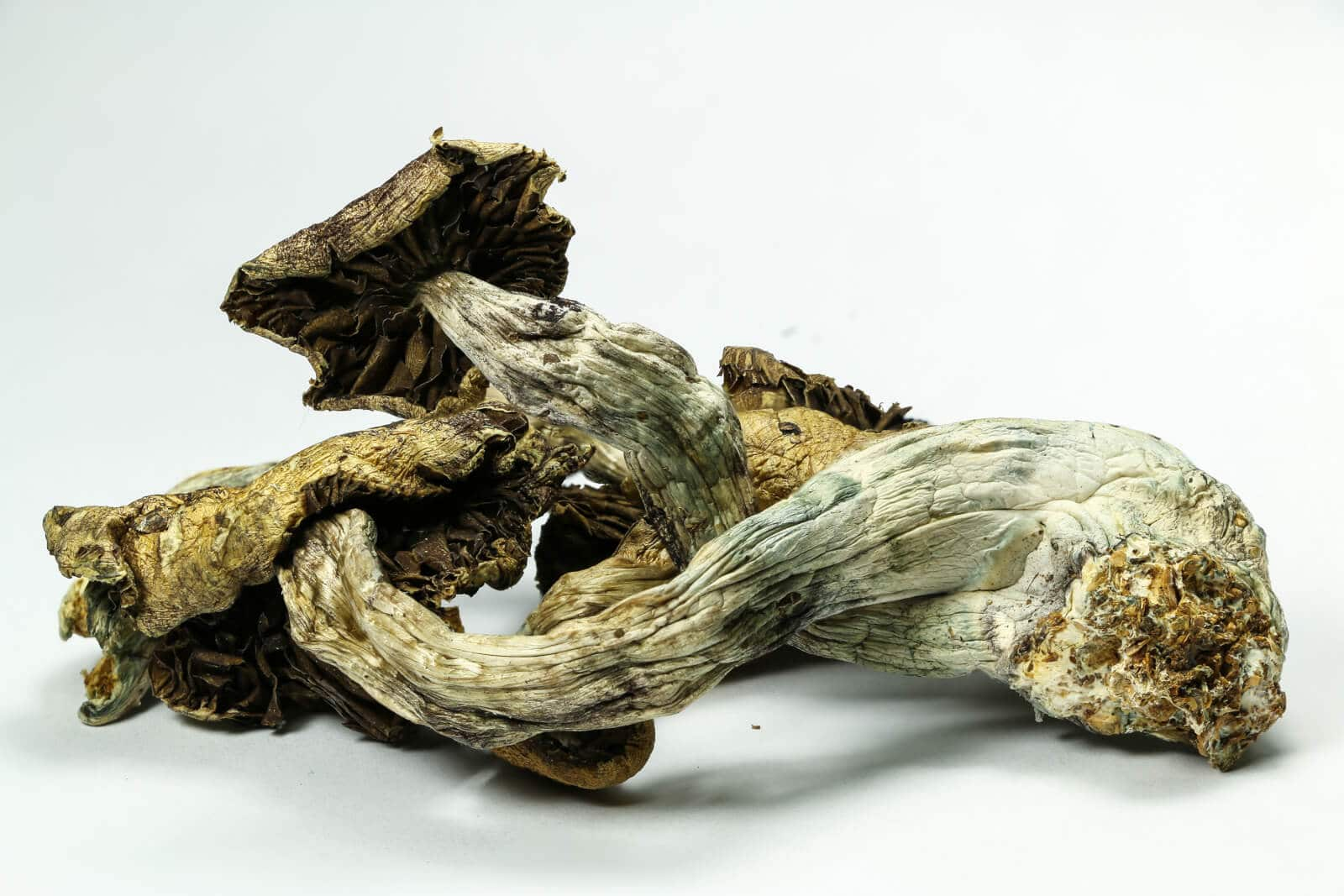 Thumbnail of Psilocybin Mushrooms Addiction, Abuse, And Treatment