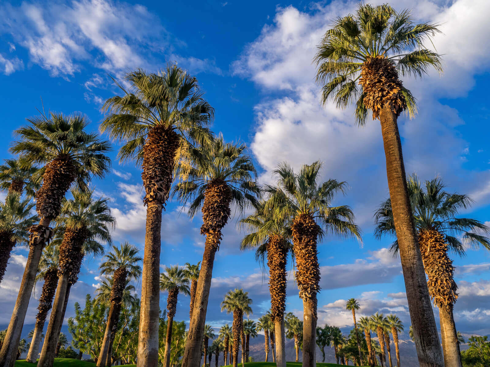 Find Drug and Alcohol Rehab in Garden Grove, California