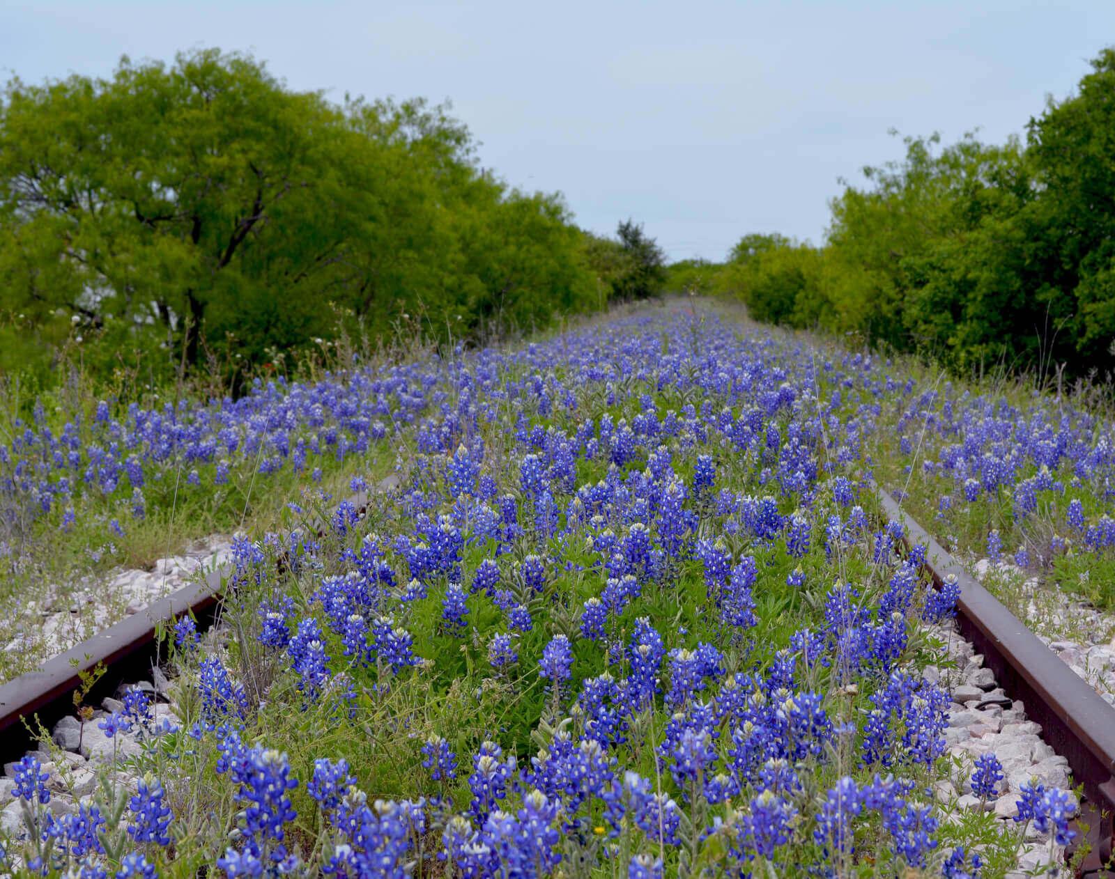 Find Drug and Alcohol Rehab in Texarkana, Texas