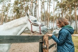 Equine-assisted therapy teaches people in recovery responsibility, behavioral control, and communication.