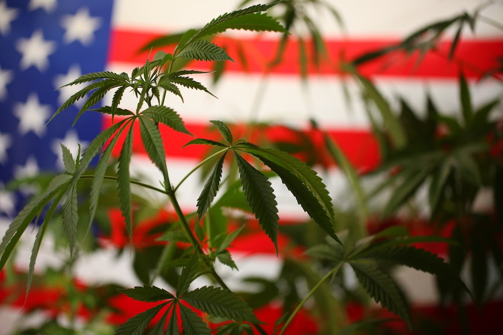Now that marijuana is legal in New York State, here's what you need to know  - State and Regional News - buffalonews.com